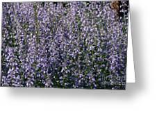Seeing Lavender Greeting Card