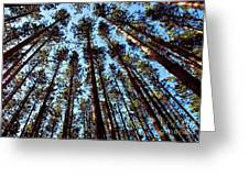 Seeing The Forest Through The Trees Greeting Card