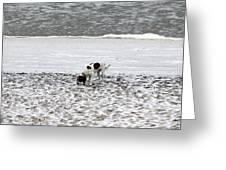 Seeking Sense Of Snow Greeting Card