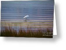 Selby Gardens_sarasota_florida 113a Greeting Card