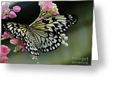 Selvana 3 Greeting Card