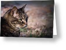 Senior Cat Greeting Card