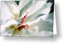 Sentinel Enter The White Peony  Greeting Card