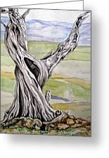 Sentinel Tree Greeting Card