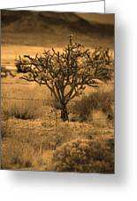 Sepia Cacti Roadside Greeting Card