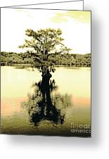 Sepia Cypress Chicot Sp Louisiana Greeting Card