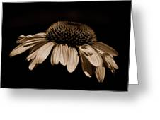 Sepia Daisy Greeting Card