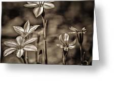 Sepia Dreams Greeting Card