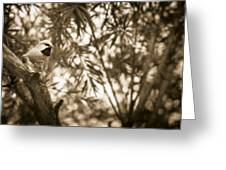 Sepia Finch Greeting Card