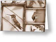 Sepia Hummingbird Collage Greeting Card