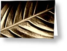 Sepia Leaf Greeting Card