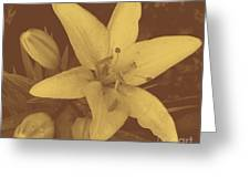 Sepia Lily Greeting Card