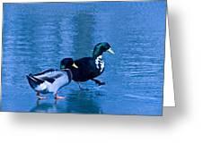 Sepia Mallard Friends Greeting Card