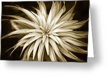 Sepia Plant Spiral Greeting Card