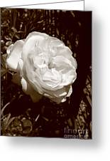 Sepia Rose Greeting Card