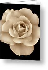 Sepia Rose Flower Portrait Greeting Card