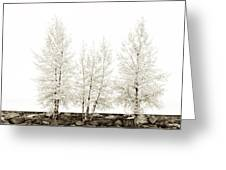 Sepia Square Diptych Tree 12-7693 Set 1 Of 2 Greeting Card