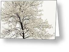 Sepia Square Tree Greeting Card