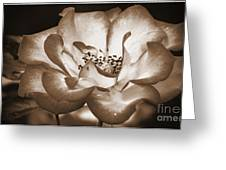 Sepia Tones Greeting Card