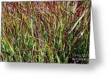 September Grasses By Jrr Greeting Card