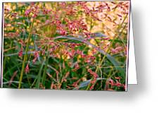 September Grasses Greeting Card