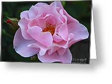 September Rose Greeting Card