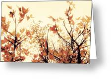 September Song Greeting Card