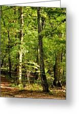 September's Woodlands Greeting Card