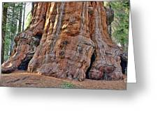 Sequoia Tree Base Greeting Card