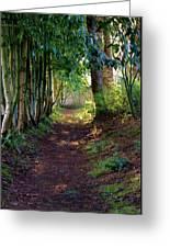 Serene Garden Path Greeting Card