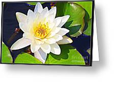 Serenity In White - Water Lily Greeting Card