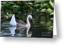 Serenity Swim Greeting Card