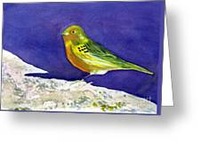 Serinus  Canaria  Aka The Canary Greeting Card