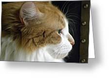 Serious Gato 2 Greeting Card