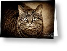 Serious Tabby Cat Greeting Card