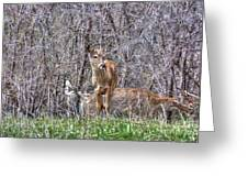 Sertoma Park Deer Greeting Card