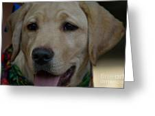 Service Dog In The Making Greeting Card