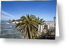 Sestri Levante And Palm Tree Greeting Card
