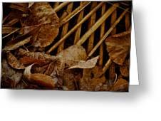Settled Leaves  Greeting Card