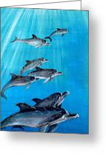 Seven Dolphins Greeting Card