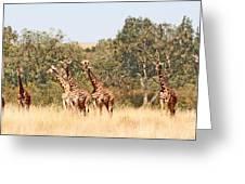 Seven Masai Giraffes Greeting Card