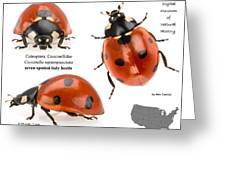 Seven-spotted Lady Beetle Greeting Card