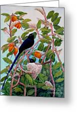 Seychelles Paradise Flycatcher Greeting Card