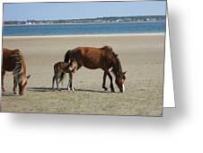 Shackleford Banks Foal Greeting Card