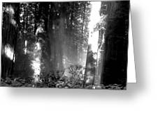 Shade Of Ghosts Greeting Card