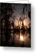 Shade On The Bayou Greeting Card