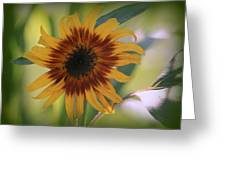 Shaded From The Sun Greeting Card