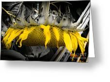 Shaded Sunflower Greeting Card
