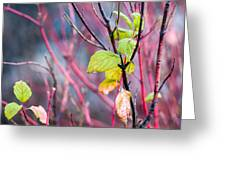 Shades Of Autumn - Reds And Greens Greeting Card