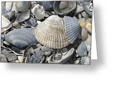 Shades Of Blue Shells Greeting Card